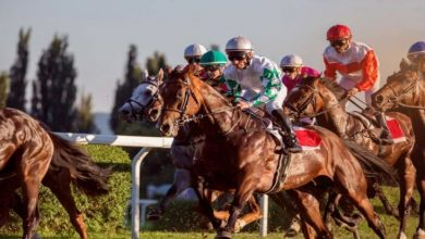 Photo of Tips And Advice for the Beginner Horse Racing Fan
